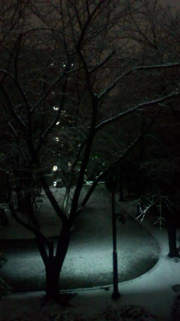 どか雪綺麗!