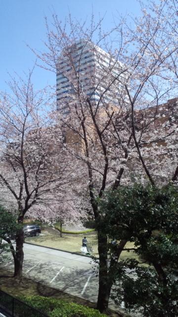 桜〓咲いた!